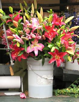 wedding flowers wholesale