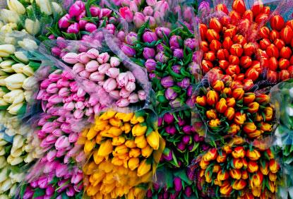 Wholesale flower bunches